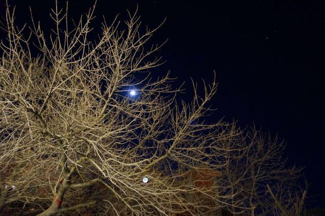 没能耐拍星空,勉强整个月亮挂树梢,聊以自慰.