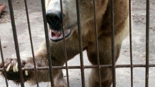 温岭动物园门票,温岭温岭动物园攻略/地址/图片/门票