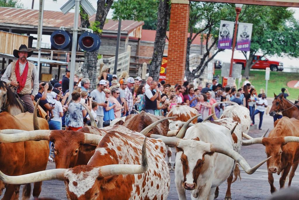 德州牛仔官方 畜牧兽医个人年终工作总结