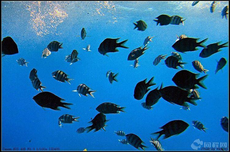 埃及游:红海海底观奇(叶平)