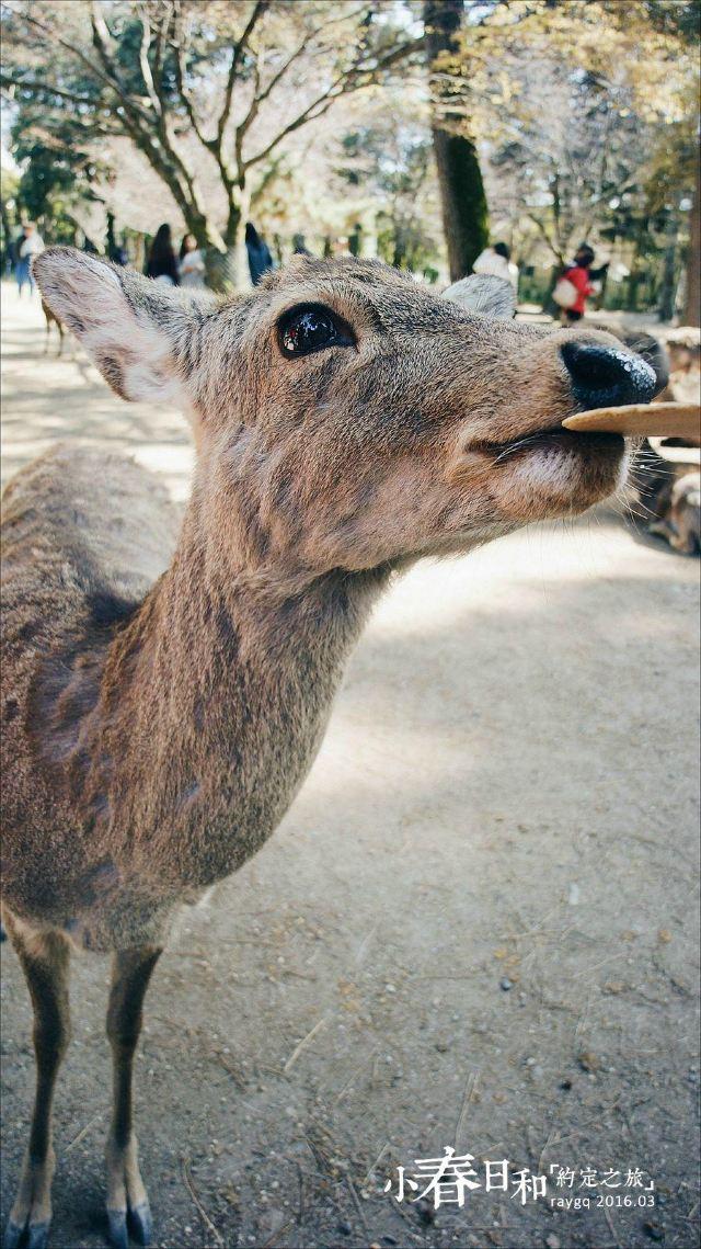 这群天生萌属性加成的生物,让人不由自主就掏腰包买了一捆又一捆鹿