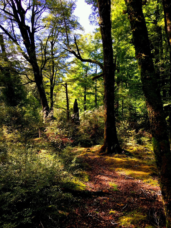 壁纸 风景 森林 桌面 1024_1365 竖版 竖屏 手机