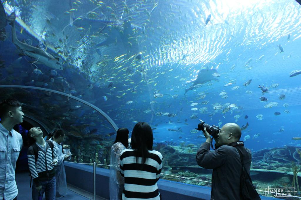 壁纸 海底 海底世界 海洋馆 水族馆 桌面 1024_682