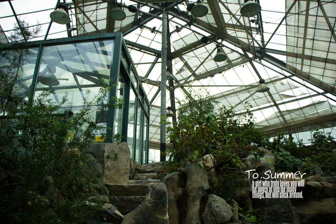 【华南植物园】温室里的花朵