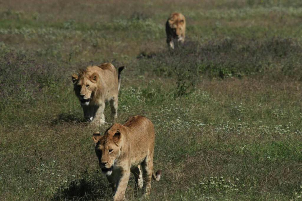 去非洲看野生动物,记坦桑尼亚游猎之旅