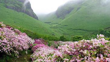 登临海拔4728米处的山口,可观日出,云海,无际的林海和远眺南迦巴瓦峰