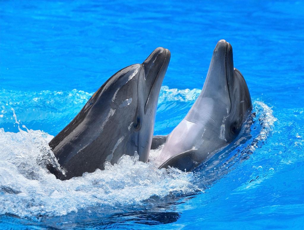 普吉岛 亲子游尼莫海豚馆海豚表演门票(可接急单 无需