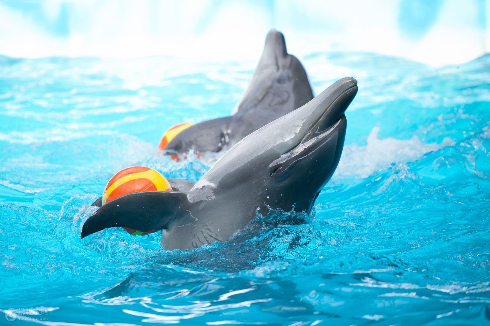 泰国普吉岛 卡塔海滩 查龙射击 尼莫海豚馆 查龙寺 人妖秀包车一日游