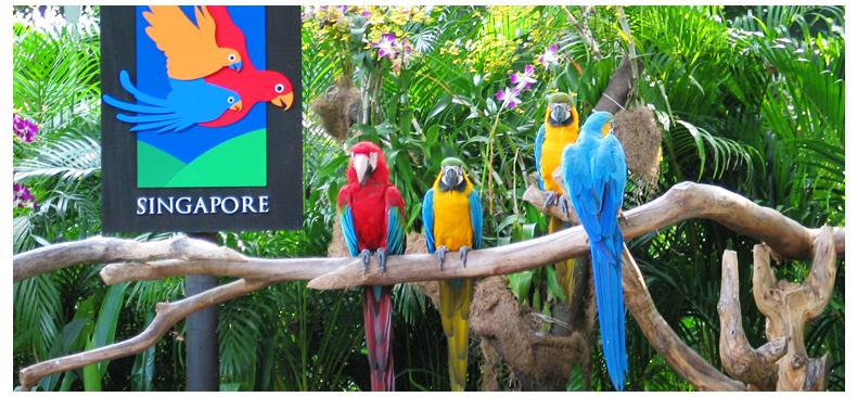 新加坡4合1套票 日间 夜间动物园不限时 河川生态园 裕廊飞禽 7天有效