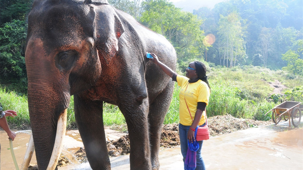 壁纸 大象 动物 1024_576