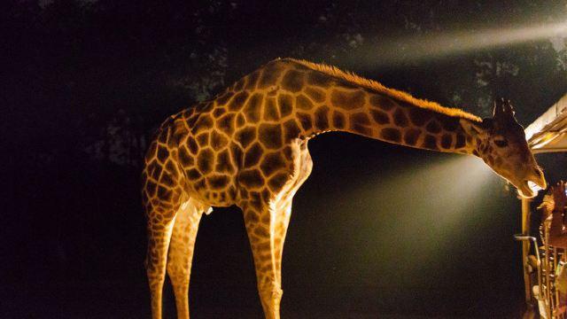 【奇妙的朋友】清迈夜间动物园+手工艺村之旅