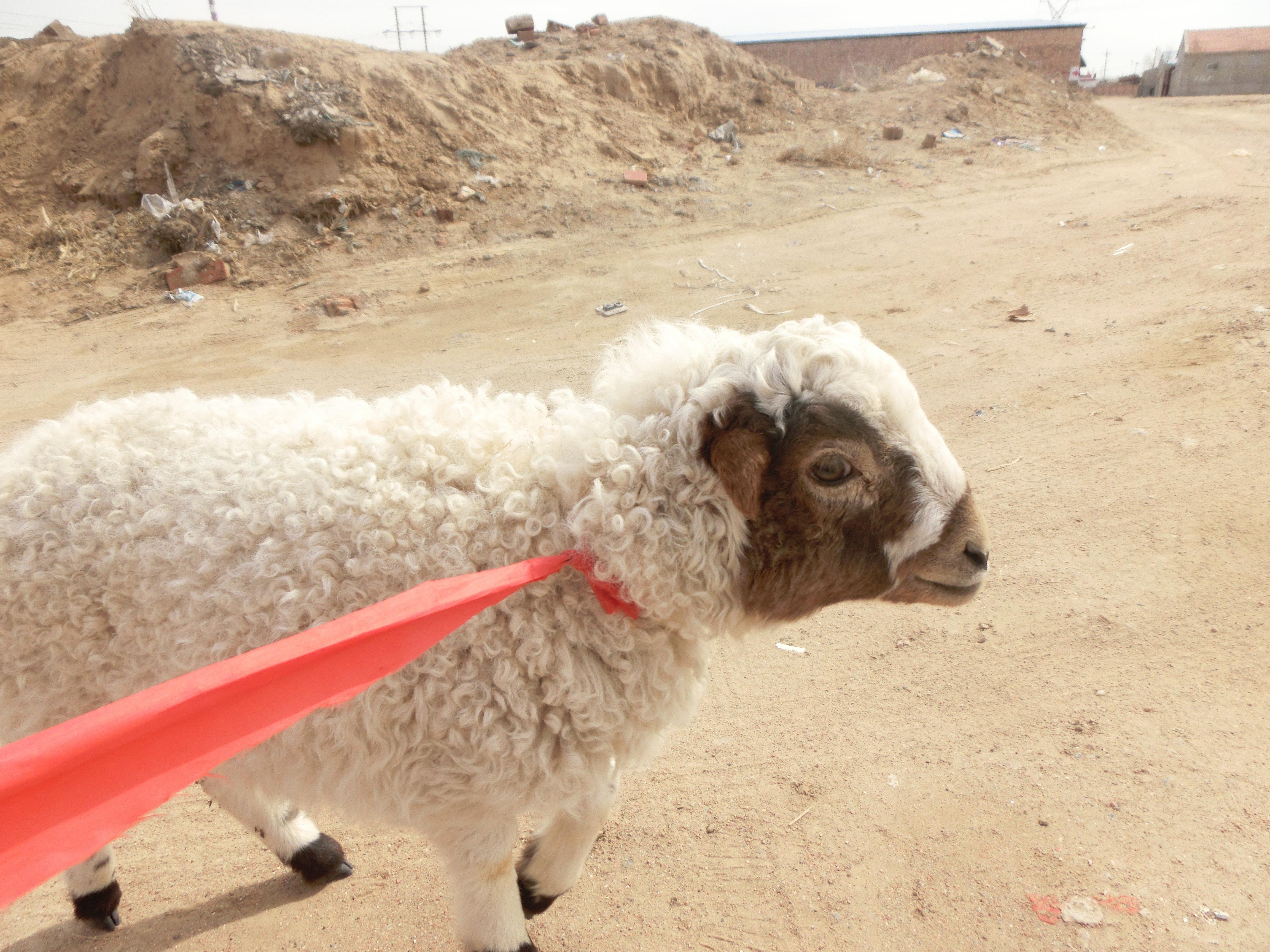户主说受过训练的动物才能骑,贸然骑未受训的动物是很危险的.