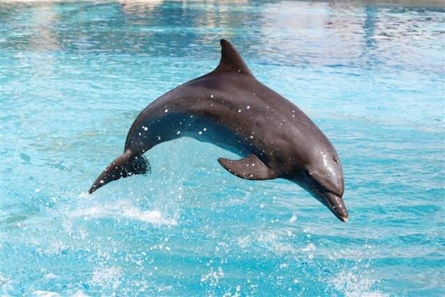 壁纸 动物 海洋动物 桌面 640_427