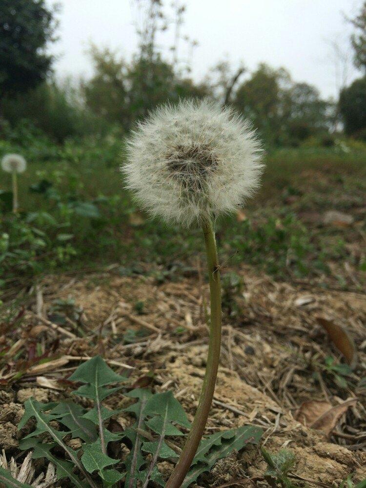 广州华南植物园 海珠湿地公园