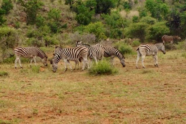 东非高原动物迁徙路线