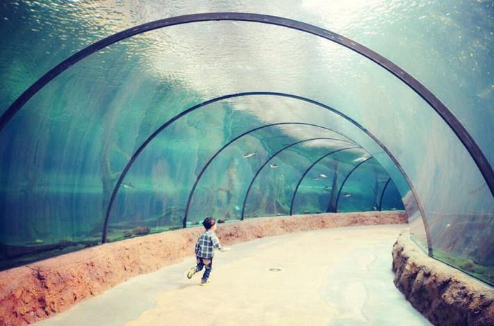 纪元,我们看鱼去--横琴珠海海洋世界亲子游-珠攻略创乐高奥宝贝图片