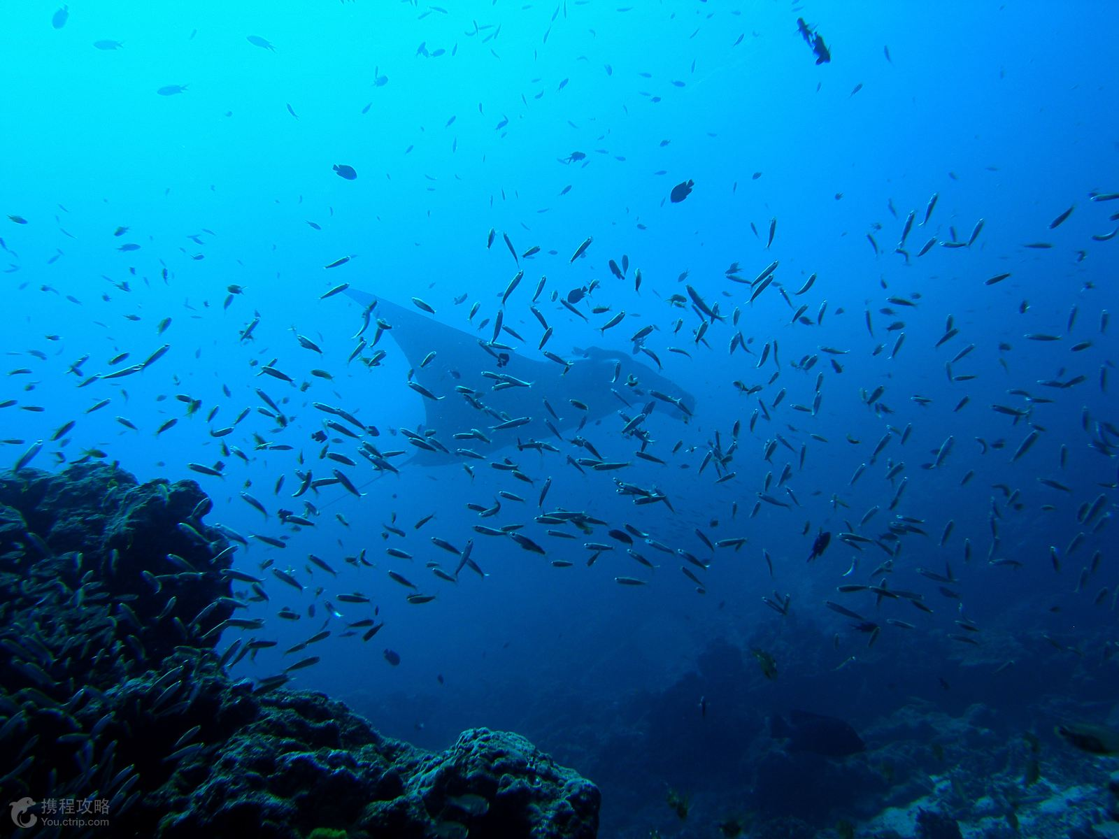 潜水·泰国斯米兰群岛浮潜观星3日游
