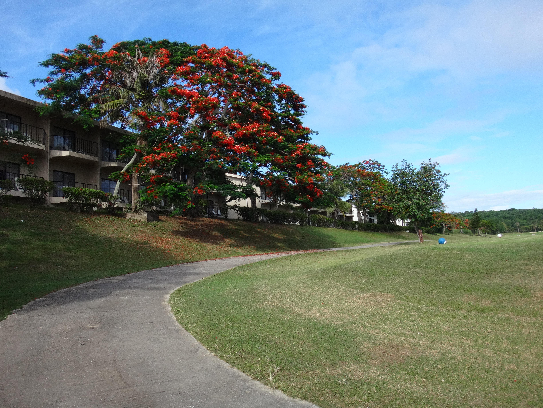 珊瑚海度假村的高尔夫球场