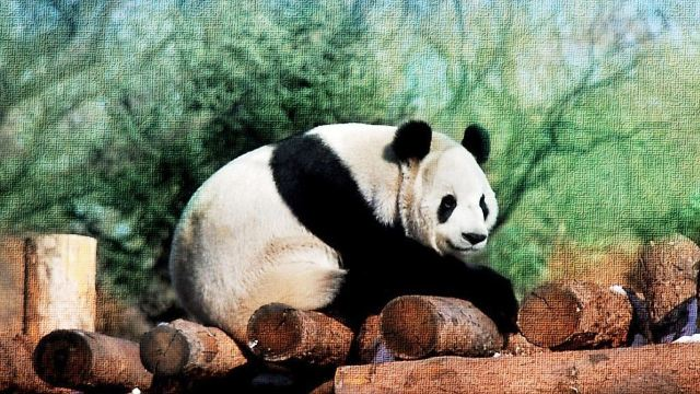 【亲子游 含熊猫馆】北京动物园一日游(承德出发)