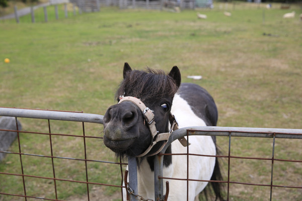 说说我们住的地方,这是个正常经营的牧场,主要是养了300头绵羊,主人