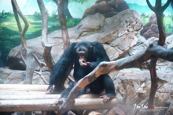 来长隆野生动物园,一起寻找《奇妙的朋友》!