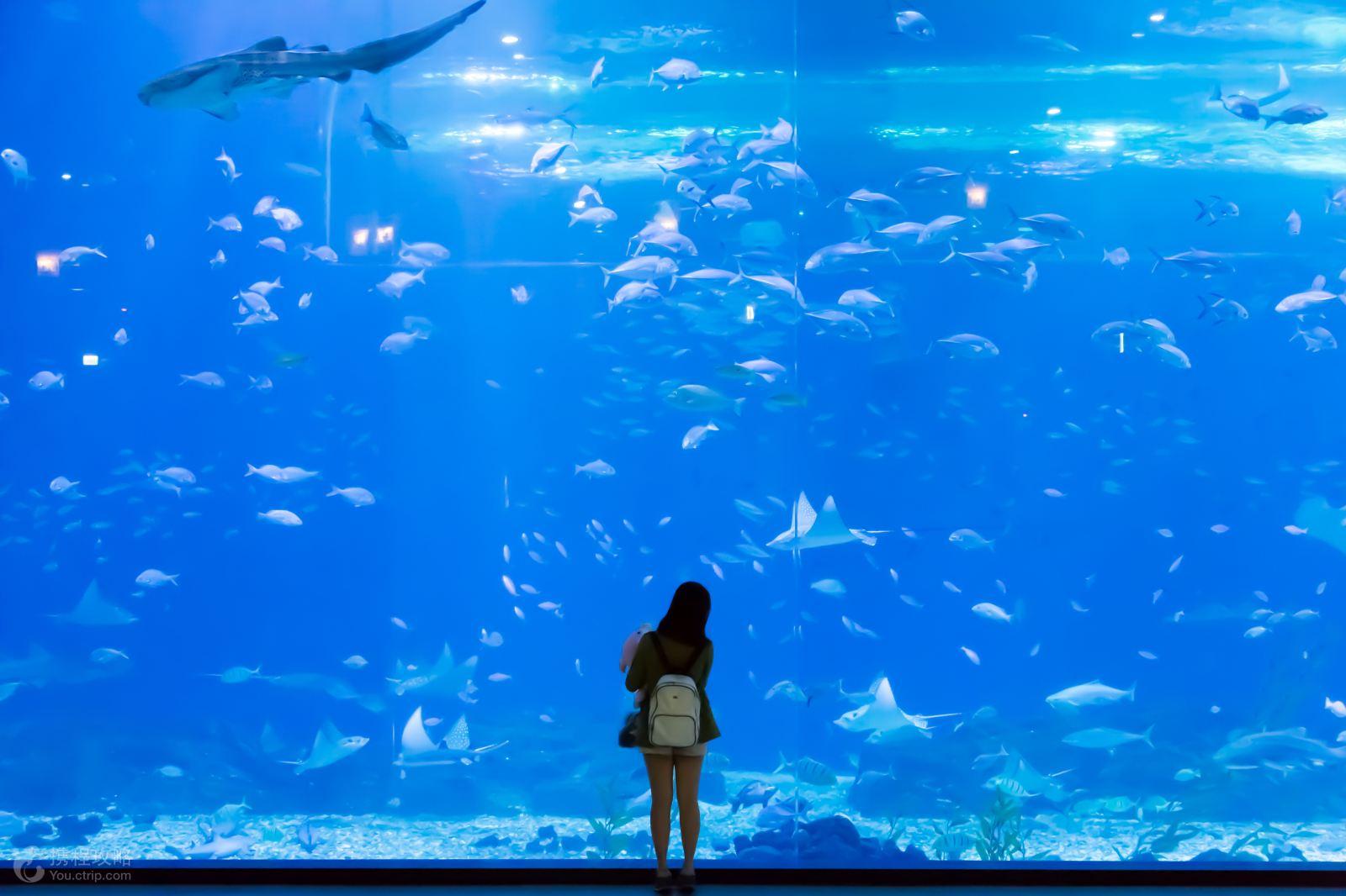 壁纸 海底 海底世界 海洋馆 水族馆 桌面 1600_1066