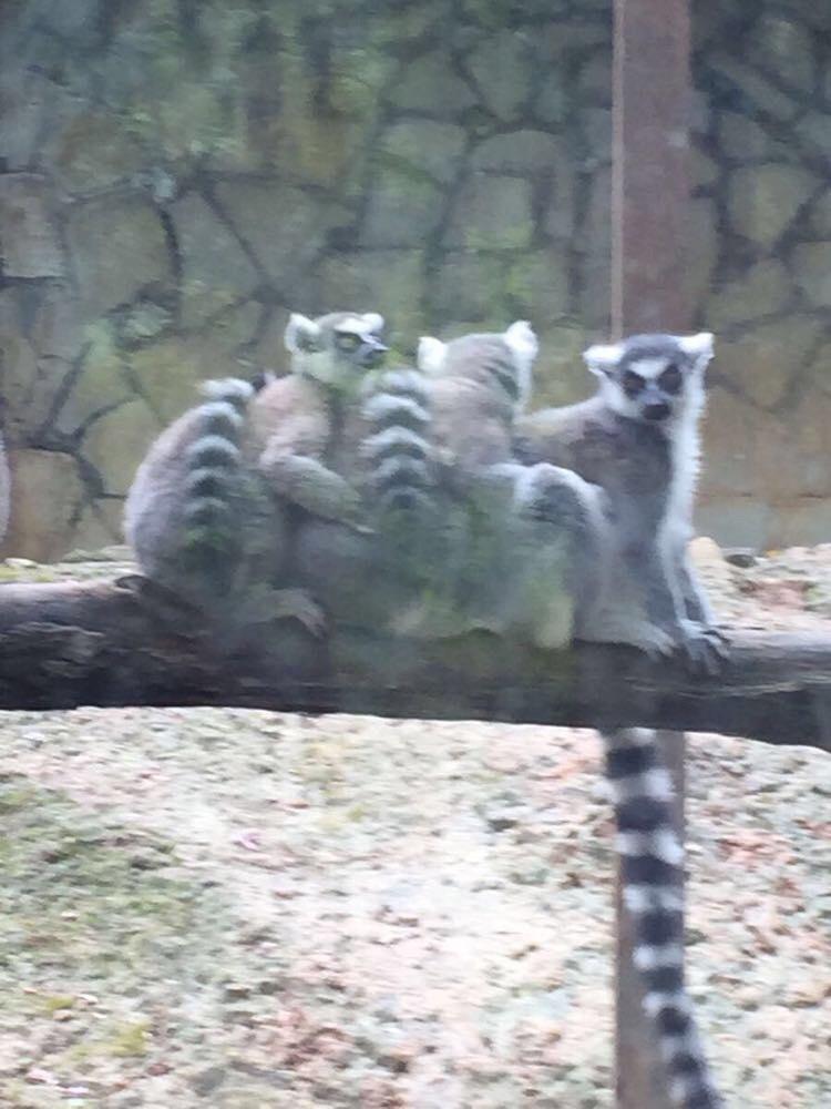 贵州扎佐动物园 - 贵阳游记攻略【携程攻略】
