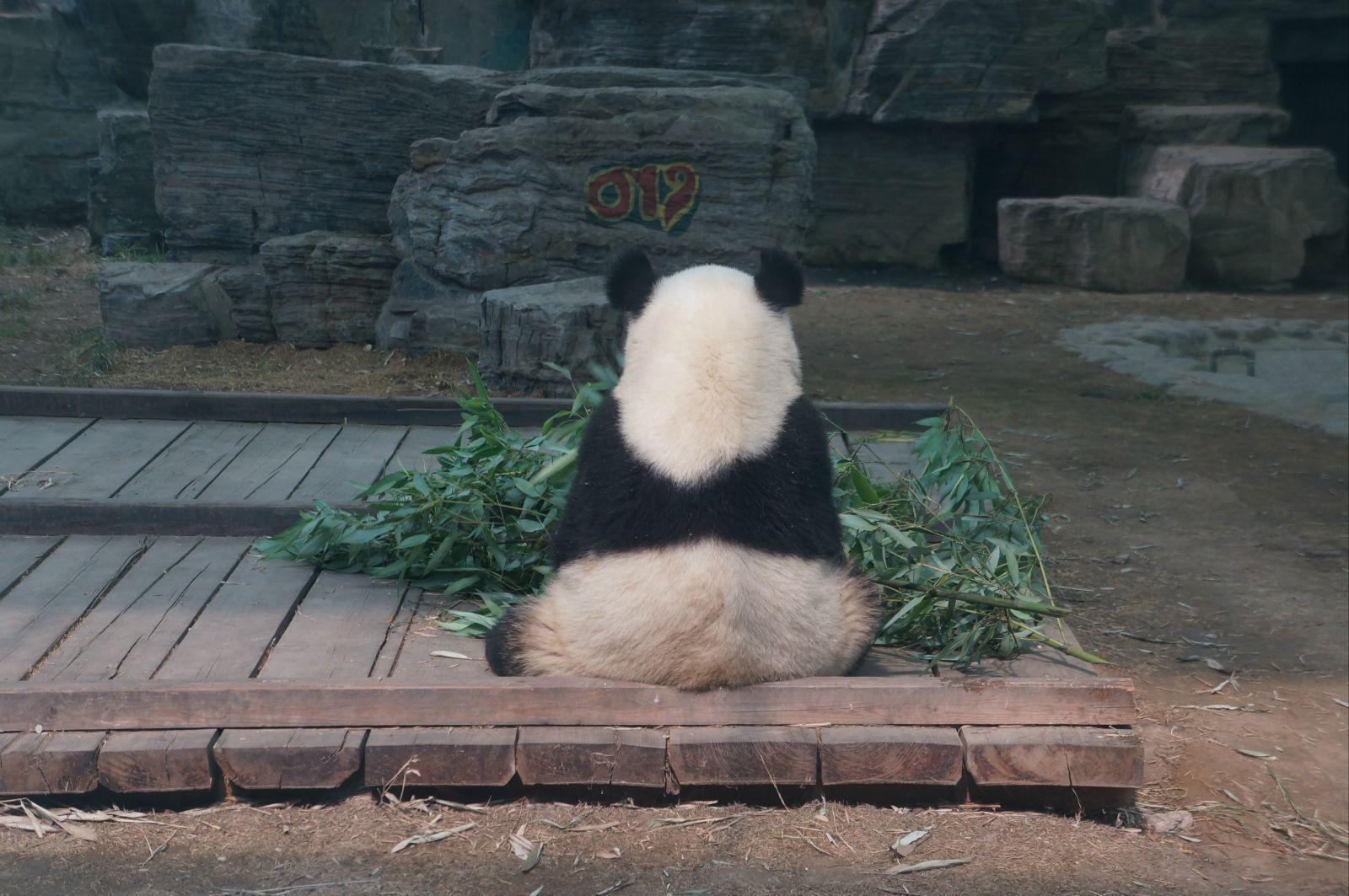 北京动物园 夜行动物 北京动物园