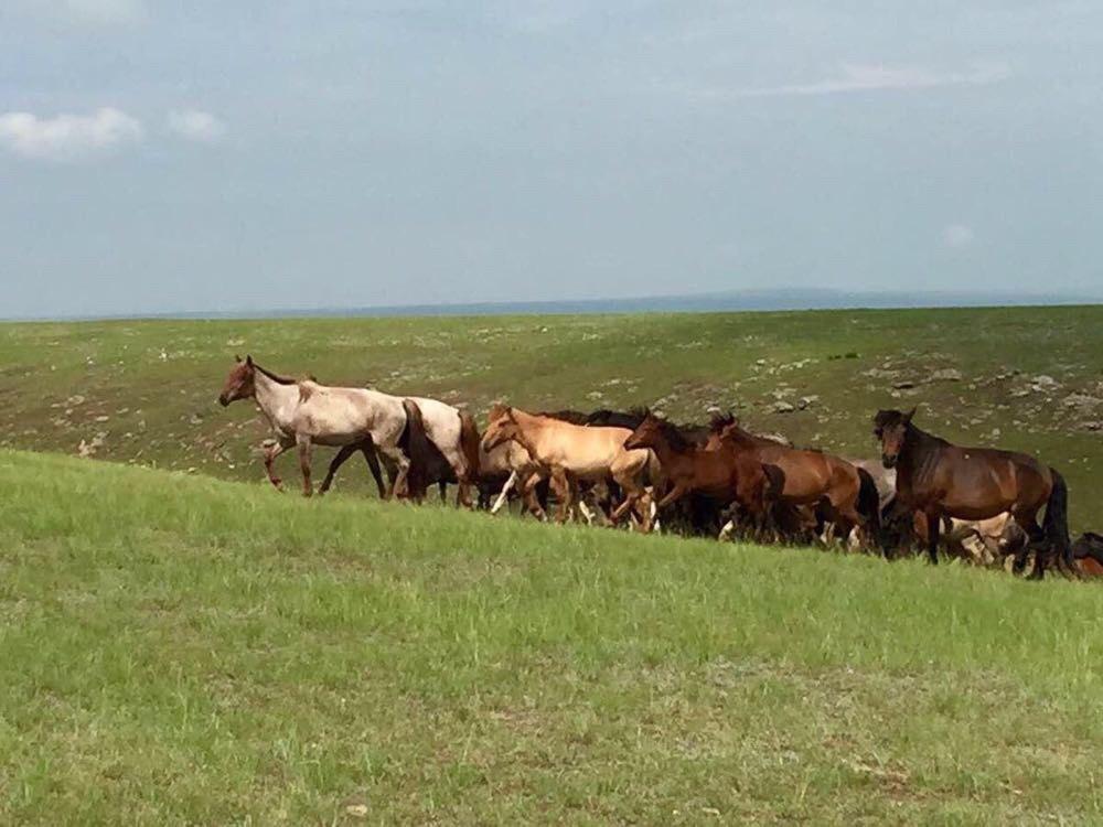 蒙古国,寻找狼图腾图片