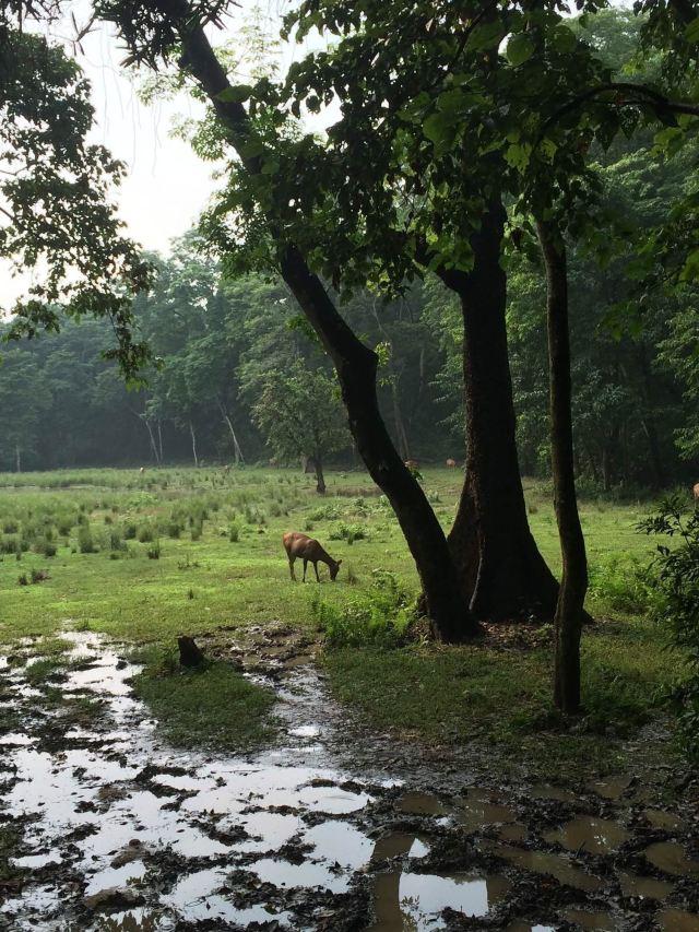 森林公园里动物很多,犀牛,孟加拉虎,鳄鱼,鹿,蟒蛇,豹就看你的眼福了