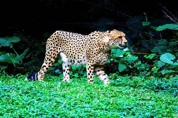 人类与动物们,能和谐同处一个地球,这样才会令整个自然界生生不息地