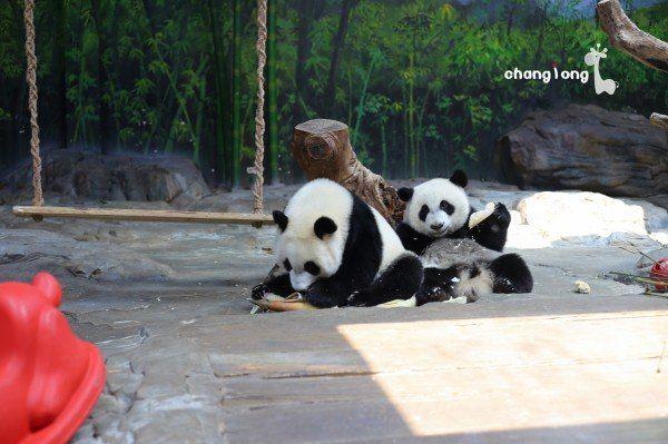 广州长隆野生动物世界,攻略 萌图!