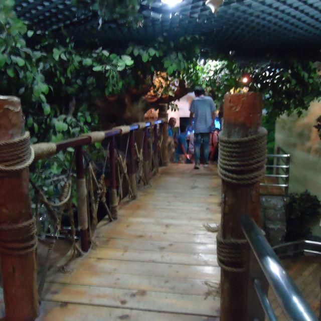 大型植物专题展览从植物的微观结构到植物群落和生态
