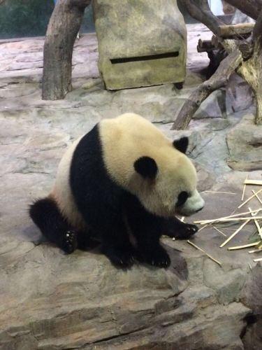 长隆野生动物世界 广州长隆酒店