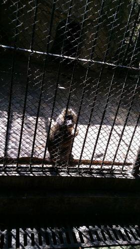 这是我在动物园看见的小