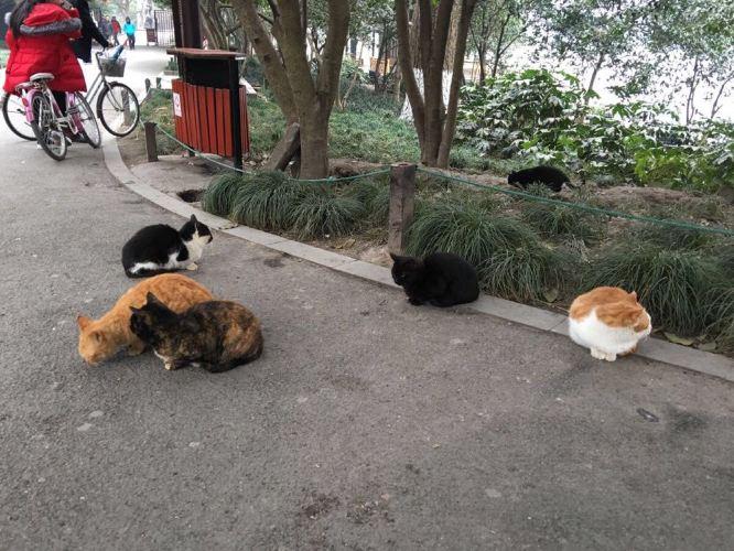 西湖旁边的野猫们超级可爱