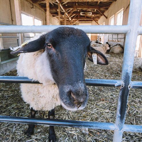 我躲避了xd 高千穗牧场的动物们