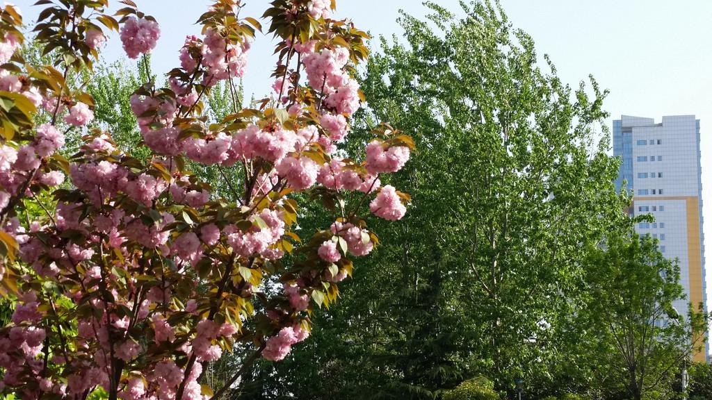 春天来了,到处是红花绿树,盎然生机.