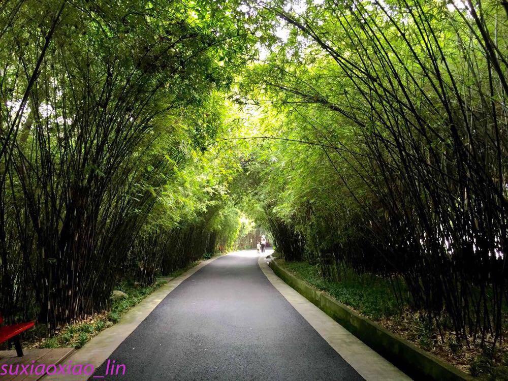 要说国宝住的环境,那是相当好的,满院子竹林,还有小熊猫,孔雀等小动物