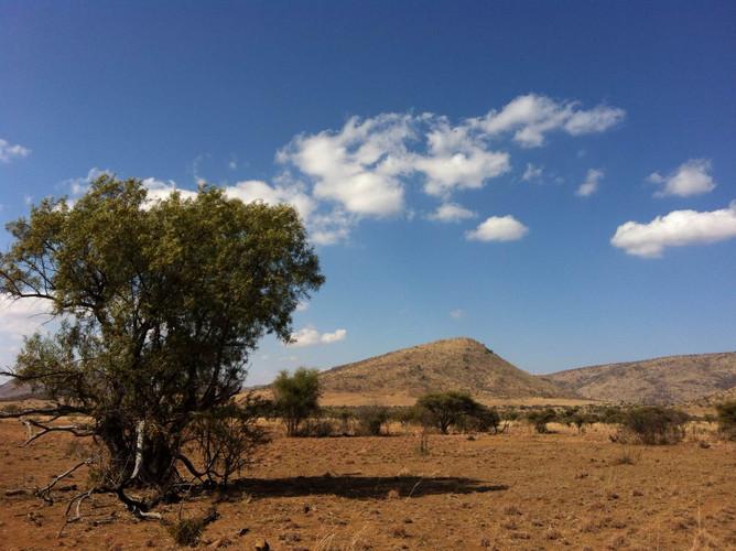 南非三大野生动物园之一的比林斯堡野国家动物保护区
