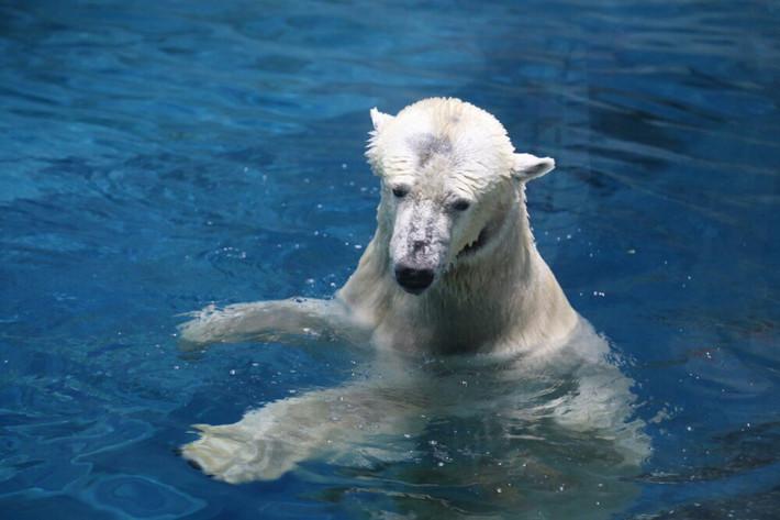 北极熊常见是昆虫人们的一类蚂蚁翻译成英文图片