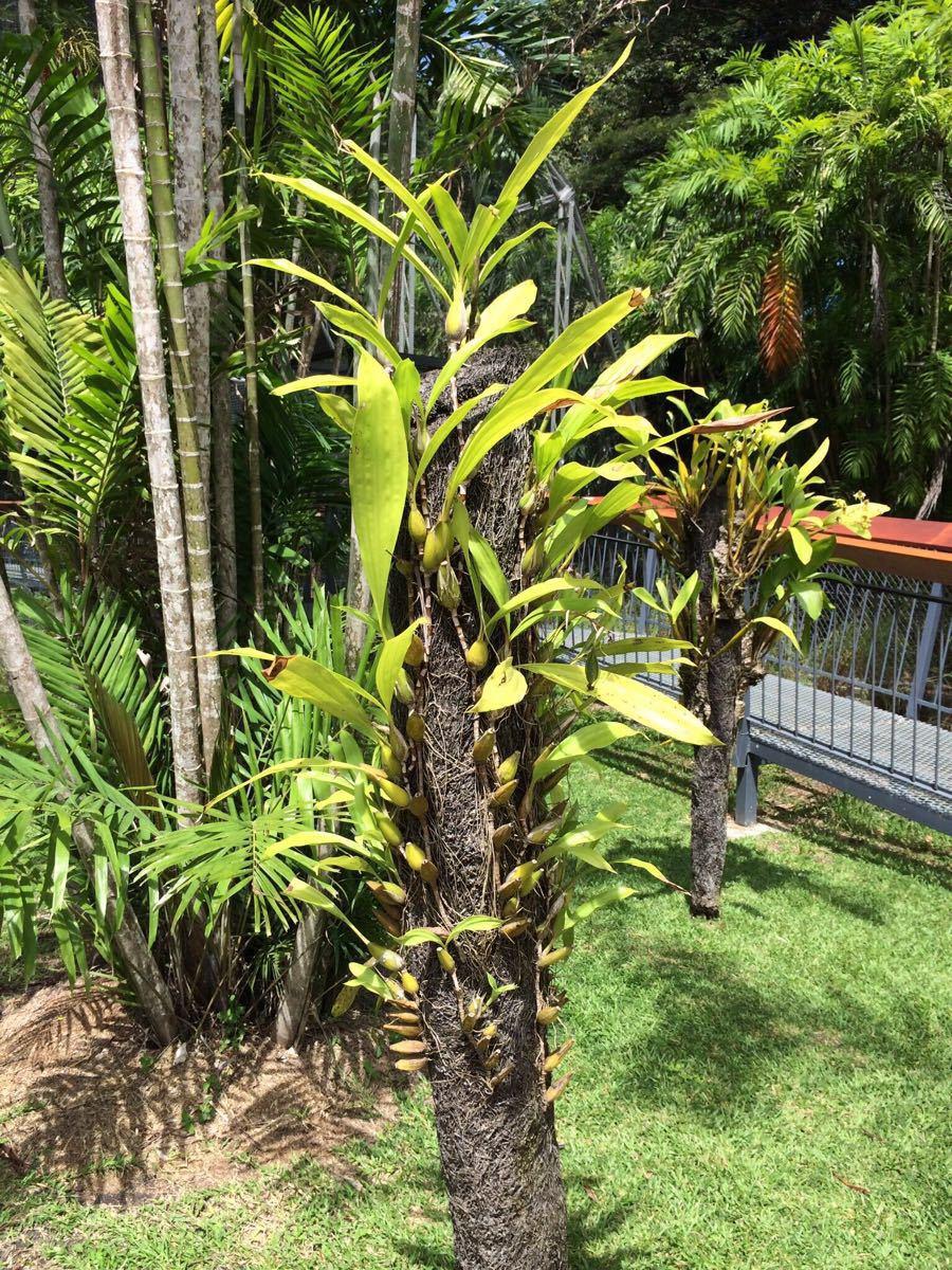 莫尔兹比港自然公园  Port Moresby Nature Park   -4