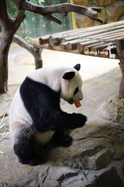 壁纸 大熊猫 动物 399_600 竖版 竖屏 手机