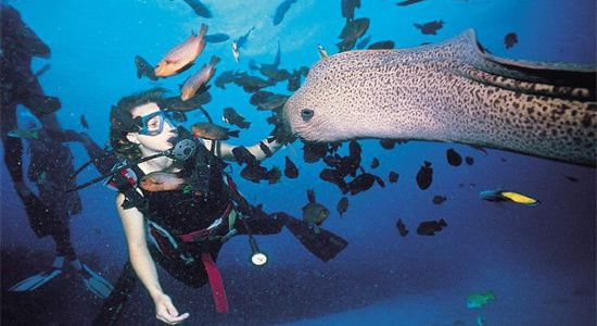 【携程攻略】探索印度洋海底惊喜——水肺潜水-向导