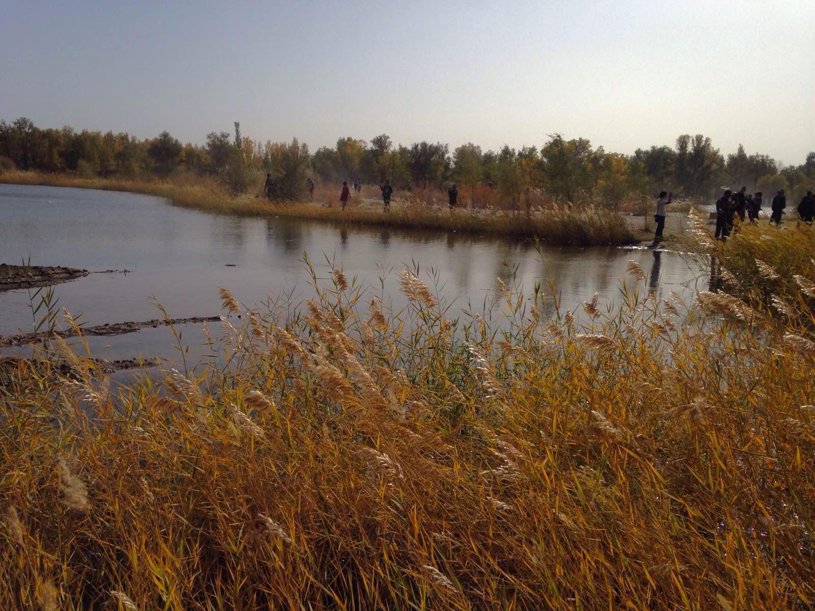 湖水中的倒影,金黄色的胡杨树叶与湛蓝的天空倒映在