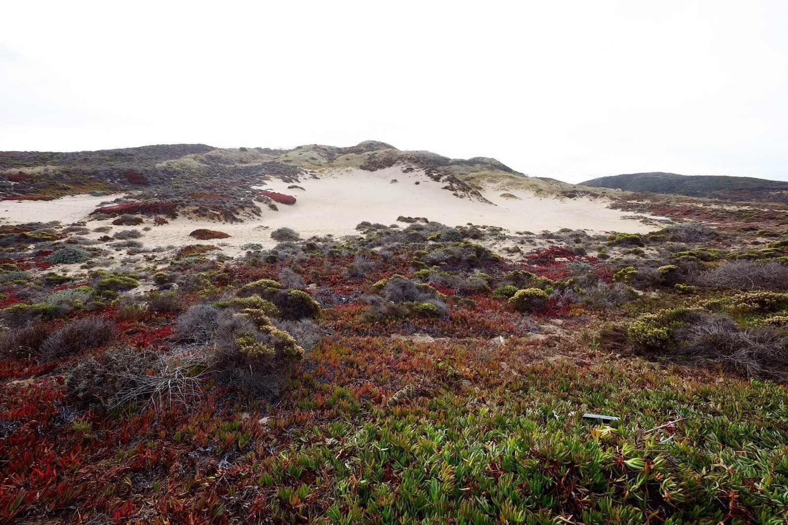 左面是平地而起斜插蓝天的山峰,各色花儿在绿色的草地上毯子般怒放着