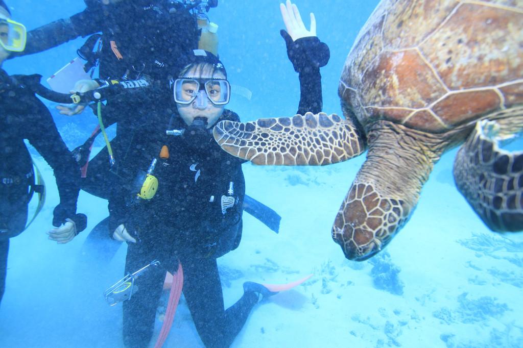 澳大利亚-凯恩斯 (大堡礁)
