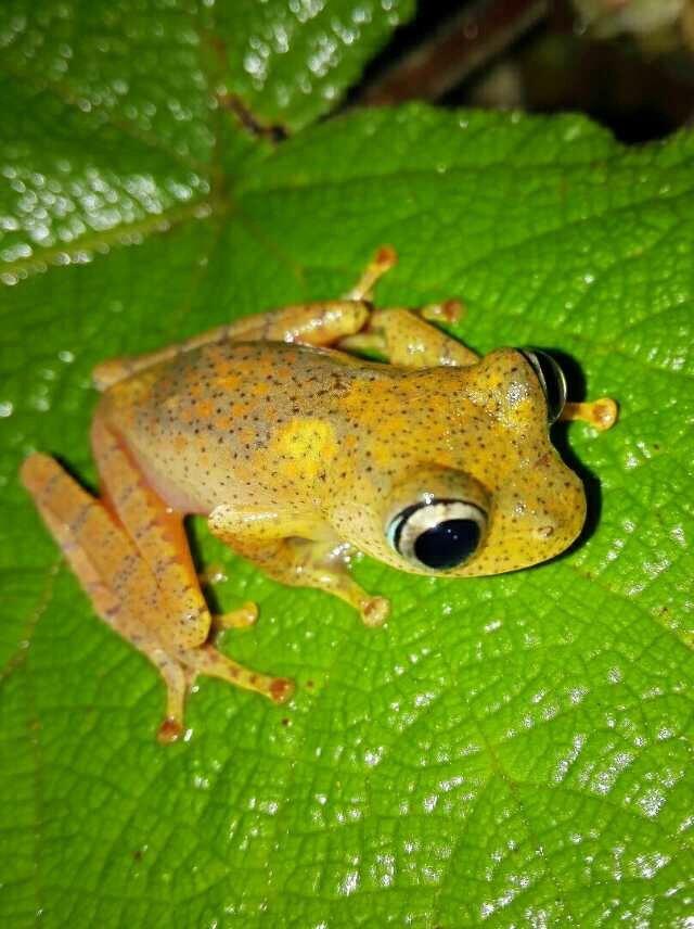 昂達西貝國家森林保護區  Andasibe Reserve   -0