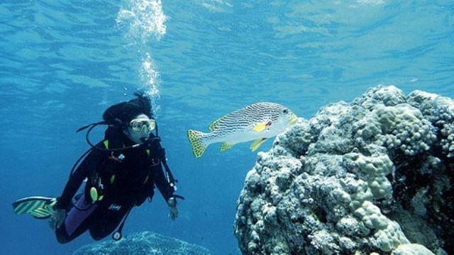 【va潜水度假村】巴厘岛图兰奔2次潜水一日游(适用初学者 中文教练