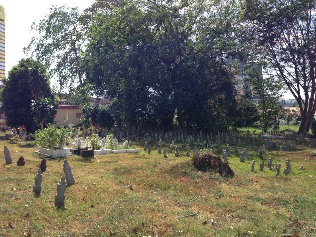 坟墓边上长树好不